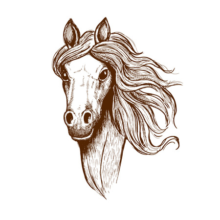 filly: Sketch portrait of welsh cob filly with flowing mane and brown velvet coat. Great for t-shirt print or equastrian club symbol design Illustration