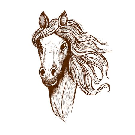 Sketch portrait of welsh cob filly with flowing mane and brown velvet coat. Great for t-shirt print or equastrian club symbol design Illustration