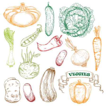 patty: Wholesome fresh orange carrot and bell pepper, green juicy cabbage and cucumber, sweet pea, kohlrabi and leek, ripe beans and potato, zucchini and patty pan squash, hot chili pepper and onion vegetables sketches Illustration