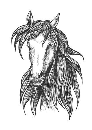 racehorse: Sketched thoroughbred racehorse icon for racing and show jumping symbols design usage with slim and athletic bay stallion Illustration