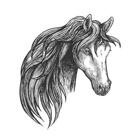 filly: Stately mare of american quarter breed sketch portrait with half turn view of pretty horse. May be used as equestrian club symbol or horse breeding theme design