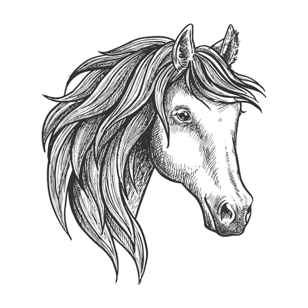 filly: Strongly built and elegant andalusian stallion with thick mane and soft and fluffy ears. Sketched portrait of spanish horse for dressage and show jumping competition symbol or horse breeding theme design