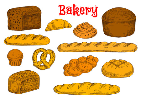 sesame seeds: Fresh baked bread from rye, whole wheat and white flour sketch icons with french baguettes and long loaves, croissant, cinnamon rolls and cupcake, braided bun and pretzel, topped by poppy and sesame seeds