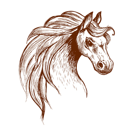 sanctuary: Angry brumby horse sketch icon of a head of wild and free-roaming feral horse in aggressive posture. Use as wildlife sanctuary or animal theme design