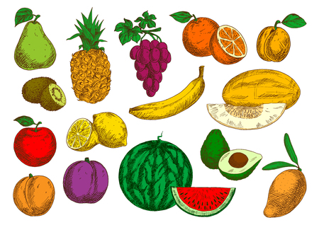 tropical garden: Sweet flavorful tropical mango and banana, pineapple and oranges, avocado, kiwis and lemons, selected garden apple, peach and grapes, pear, plum and apricot, ripe melon and watermelon fruits sketches