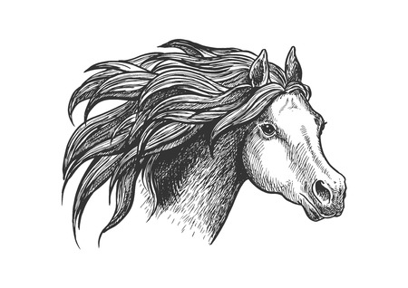 vigorous: Sketch of vigorous and graceful running horse vintage engraving stylized icon of appaloosa mare with airy flowing mane. Use as horse breeding industry symbol or equestrian club design Illustration