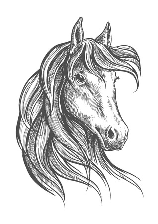 forelock: Engraving sketch of gorgeous and graceful arabian stallion head symbol with long wavy forelock. Great for equestrian sporting competition or horse breeding themes design Illustration