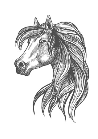 horse show: Sketched profile portrait of purebred horse of andalusian breed with head of beautiful adult mare. May be use as show jumping or dressage horse show symbol design Illustration