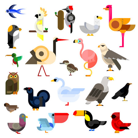 pigeon owl: Cartoon flat icons of owl and eagle, swallow and hummingbird, parrot and falcon, penguin, stork and swan, sparrow and pigeon, flamingo and gull, ostrich and raven, pecker and toucan, cardinal and pelican, blackcock and kiwi birds