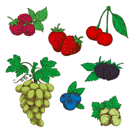 fragrant: Fragrant wild strawberries, raspberries, blackberries and blueberries, green table grapes, sweet cherries, and gooseberries fruits with fresh green leaves and stems sketch icons in retro style Illustration
