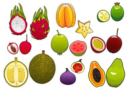 Appena colto giallo brillante stella di frutta e litchi rosa, morbido e maturo frutto della passione e feijoa, fichi e papaya, guava succoso, frutta drago e frutta durian dolce fette integrati, mostrando i semi e carne