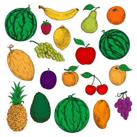 purple grapes: Colored sketched fresh apple, orange and mango, banana, lemon and peach, green and purple grapes, cherries and raspberry, watermelon, pineapple and pear, melon, avocado and apricot fruits. Healthy and diet dessert design