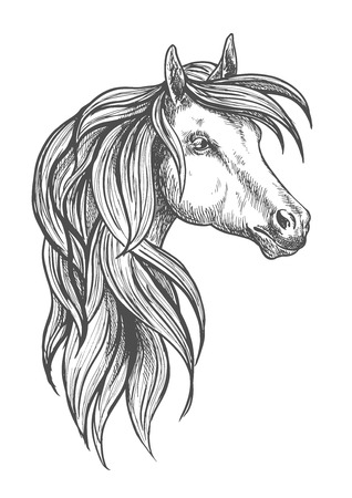 filly: Cavalry war horse of morgan breed icon in sketch style for horse breeding or western riding symbol design with powerful and beautiful young stallion