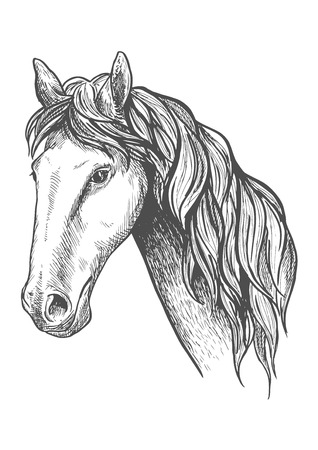 Purebred racehorse graceful profile with sketched head of appaloosa mare with slender neck and long wavy mane. May be use as equestrian sport symbol or horse breeding theme design Çizim