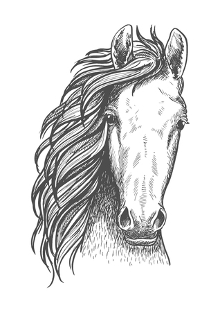 feral: Wild mustang isolated sketch symbol for wildlife theme or t-shirt print design usage with close up portrait of a head of american free-roaming or feral horse.