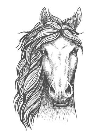 Hermoso icono de boceto de semental árabe para el símbolo de la cría de caballos, el diseño del emblema del club ecuestre o equitación. Vista frontal de la cabeza de un caballo de raza pura con orejas alertas