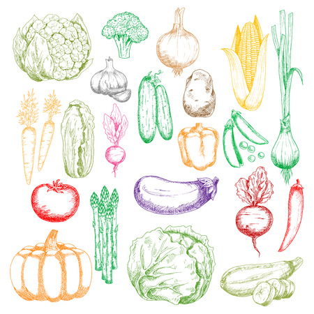 green peas: Colored sketched healthy farm corn, pumpkin and cabbages, tomato, onions and peppers, broccoli, eggplant and garlic, green peas, cucumbers and beet, cauliflower, radish and asparagus vegetables icons Illustration