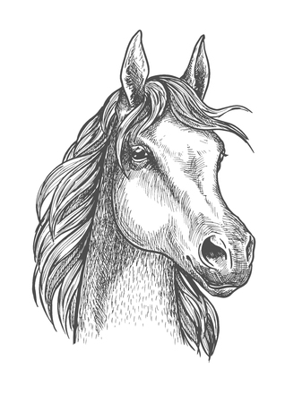filly: Cute scottish pony close up portrait of sketched small horse head with silky and soft hair. Great for horse breeding symbol or riding club badge design