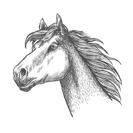 Sketch illustration of a running horse for equestrian performance sport theme or hippodrome symbol design usage with galloping racehorse of andalusian breed