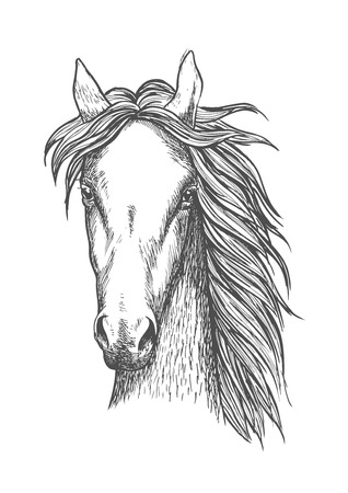 thoroughbred: Sketched symbol of riding club or horse breeding and crossbreeding theme design with muscular and powerful thoroughbred stallion