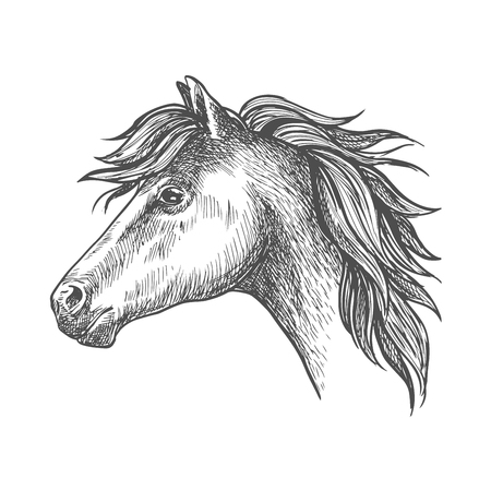 clydesdale: Profile of heavy farm horse isolated sketch icon of clydesdale mare with short mane and strong neck. Use as organic farming theme, horseback riding tour and family outdoor activity design Illustration