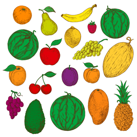 flavorful: Flavorful tropical mango, pineapple and orange, banana, lemon and avocado, juicy green and purple grapes, apple, pear and peach, cherries, raspberry and plum, apricot, watermelons and cantaloupe sketch icons Illustration