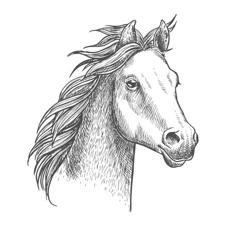 lively: Lively purebred foal of arabian breed sketch icon. Portrait of little horse, future champion. Equestrian competitions symbol or horse breeding theme design
