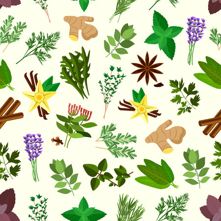 dill: Fresh spicy herbs and condiments seamless pattern background with parsley, mint and rosemary, basil, dill and anise, thyme, oregano and cinnamon, ginger, bay leaves and vanilla, cloves, arugula, lavander, terragon and sage Illustration