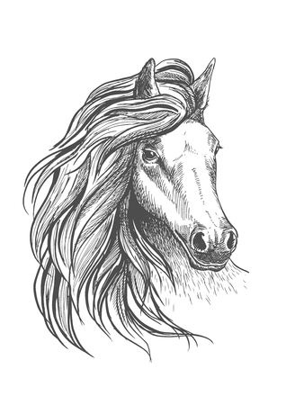 glance: Sketch of horse head with glorious wavy mane and calm look, playful glance and elegant neck. Isolated on white. For equestrian sport design