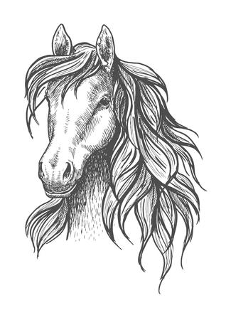 조용한 표정과 아름다운 물결 모양 갈기, 평화로운 눈과 우아한 목으로 젊은 말 머리 스케치. 야생 동물의 기호 또는 마스코트 디자인, 승마 스포츠 또