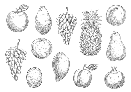 garnet: Sketch of vegetarian fruits in retro style. Naturally grown ripe apple and fresh mango, exotic pineapple and mature avocado, raw melon and tasty apricot, grape branch and kiwi, pear and garnet or pomegranate, plum.