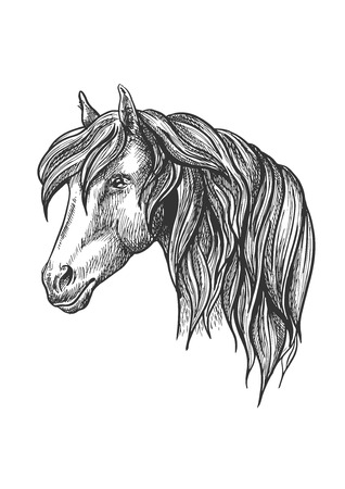glance: Calm looking horse head sketch with charming curly mane, happy glance. For mascot design or wildlife symbol, fauna or equestrian sport themes.