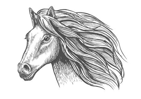 수 컷이나 종마 열망있는 표정과 덥수룩 한 갈기, 사려 깊은 눈과 아름다운 목으로 젊은 말 머리 스케치. 동물 군 테마 및 야생 동물 상징, 마스코트 디 일러스트