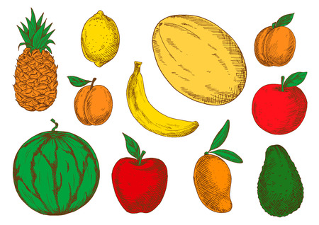 greengrocer: Colorful sketch of vegetarian fruits. Exotic mango and raw avocado, tasty melon and mature pineapple, juicy watermelon and fresh apricot, sour lemon or lime and big melon