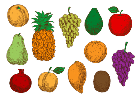 greengrocery: Green and violet grapes, red apple and pomegranate, orange, mango, peach and apricot, green pear and kiwi, pineapple and avocado fruits. Fresh fruits sketches for organic farming design