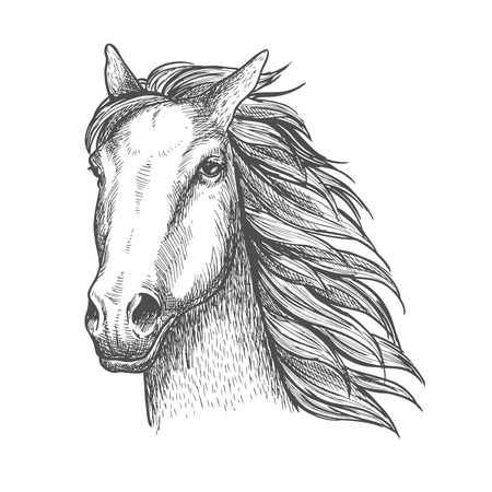racehorse: Racehorse stallion sketch of purebred horse head with flying mane on the wind. Equestrian sport theme or horse racing design Illustration