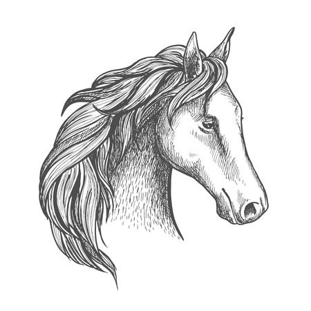 filly: Sketched horse head icon with purebred stallion of arabian breed. Equestrian eventing sporting competition symbol or horse racing badge design Illustration