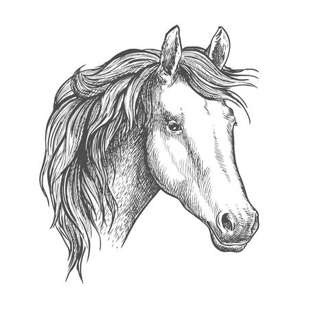 純血種の馬の頭のアラビア馬のスケッチ。競馬の記号または乗馬のスポーツ テーマ デザイン