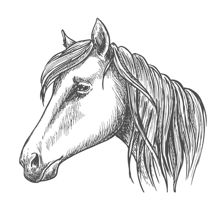 Riding horse head sketch with long mane. Horse racing, equestrian sport theme or t-shirt print design Illustration
