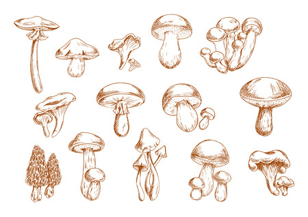 recipe book: Delicious edible mushrooms sketches with engraving stylized porcini, ceps, shiitake, chanterelles, oysters, morel, honey agarics and portabella. Use as old fashioned recipe book or menu design