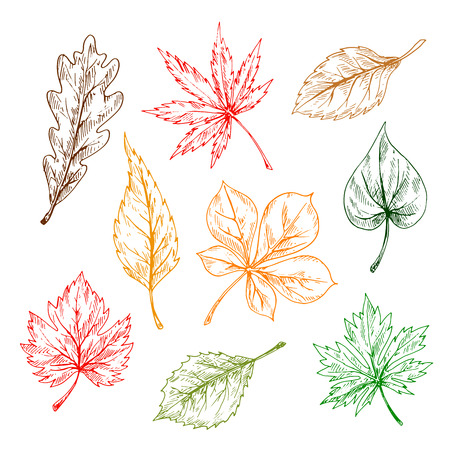 oak trees: Leaves of trees and plants set. Hand drawn pencil sketch drawing. Oak, maple, birch, aspen, chestnut, elm leaves for print or fall design Illustration