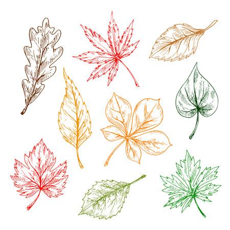 elm: Leaves of trees and plants set. Hand drawn pencil sketch drawing. Oak, maple, birch, aspen, chestnut, elm leaves for print or fall design Illustration
