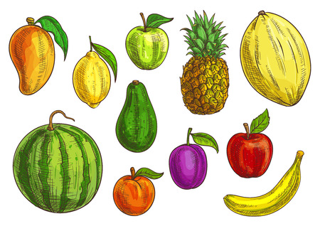 Hand drawn tropical and exotic fruits illustration. Isolated fruit elements. Vector sketches of banana, green and red apple, mango, watermelon, lemon, avocado, apricot, plum, pineapple and melon 向量圖像