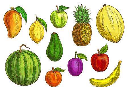 Hand drawn fruits tropicaux et exotiques illustration. éléments de fruits isolés. croquis de vecteur de banane, de pomme verte et rouge, mangue, melon d'eau, de citron, d'avocat, d'abricot, de prune, d'ananas et de melon