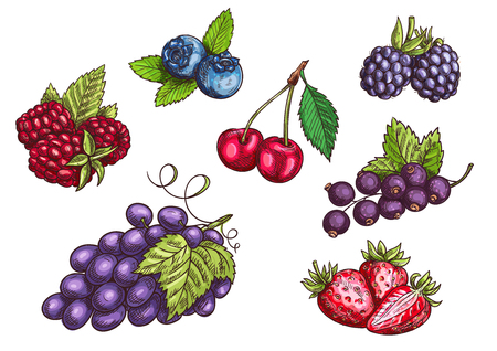 Berries set. Hand drawn color pencil sketch. Vector Strawberry, Blackberry, Blueberry, Cherry, Raspberry, Black currant, Grape berries with leaves