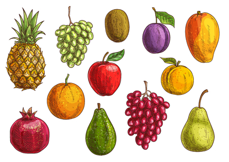 apple isolated: Tropical and exotic fruits set. Isolated vector sketch icons of juicy pineapple, green and red grape, pomegranate, orange, kiwi, apple, pear, guava, plum, apricot mango