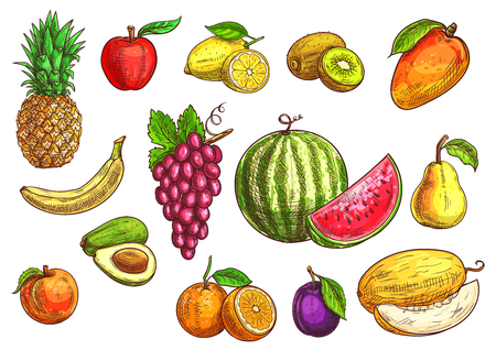 Fruits set. Sketch hand drawn illustration of isolated vector tropical and exotic fruits. Color drawings of pineapple, banana, apple, avocado, peach, red grape, lemon, orange, watermelon, kiwi, plum, mango pear melon