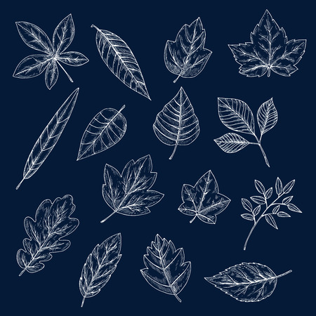 oak trees: Chalk leaves of maple, oak, olive, chestnut, sycamore, elm, birch, willow, cherry and beech trees. Foliage chalk silhouettes for nature theme or ecology design