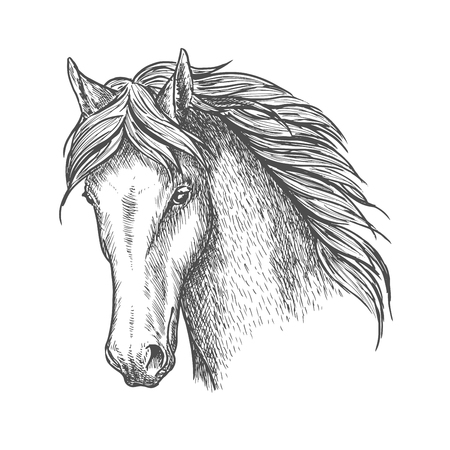 Purebred horse head sketch icon. Riding club and horse racing symbol or t-shirt print design Illustration