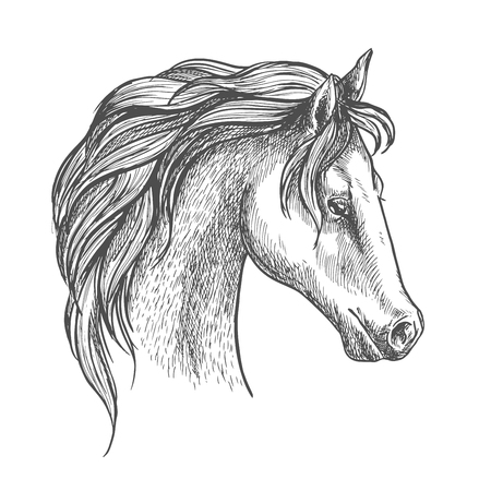arched: Arabian horse sketch with arched neck and curly long mane. Equestrian sporting symbol or horse racing theme design